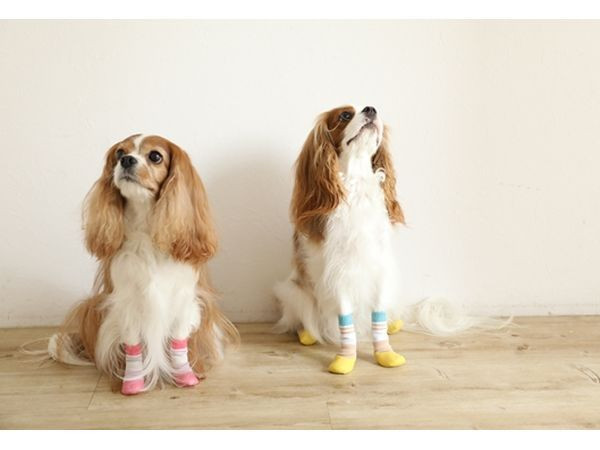 Long socks for Dog hard to come off is available! 6649faa8e